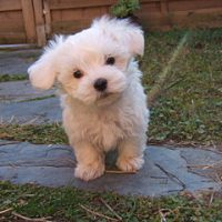 Five cognitive biases to fight (and why puppies will help)